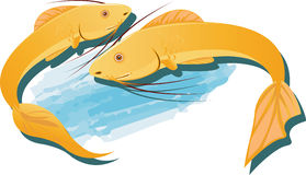 Catfishs Royalty Free Stock Images