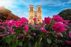 Cathédrale de Notre-Dame dans des Frances de Paris avec des roses Image stock