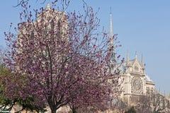 Cathédrale de Notre Dame de Paris Photos stock