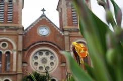 Cathédrale de Notre Dame en Ho Chi Minh City, Vietnam, fleur dans le premier plan Photo stock