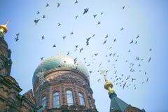 Cathédrale et pigeons de sophia de saint Image libre de droits