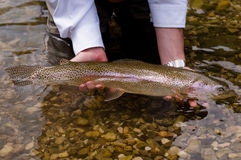Cath and release. Rainbow trout is releasing to the mountain river , Slovenia Stock Image