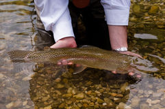 Cath and release. Rainbow trout is releasing to the mountain river , Slovenia Royalty Free Stock Photo