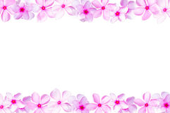 Catharanthus roseus, flower frame Royalty Free Stock Photo