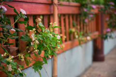 Catharanthus roseus and Jasmine Stock Image