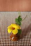 Cathartica do Allamanda no vaso pequeno Fotografia de Stock Royalty Free