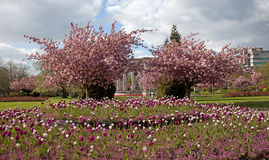 Cathays Park in spring Stock Photography