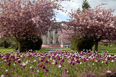 Cathays Park in spring Royalty Free Stock Photo