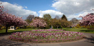 Cathays Park in spring with blossom and tulips Stock Images