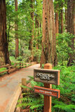 Cathedal Grove, Muir Woods National Monument Stock Photography