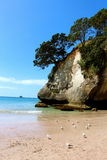 Cathedral Cove New Zealand Seagulls Stock Photos