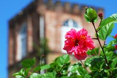 The Cathedral Flower Royalty Free Stock Photo