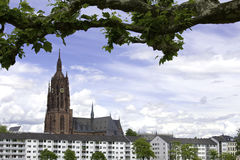 Cathedral of Frankfurt. A view of the Cathedral of Frankfurt called Kaiserdom with in front a branch Royalty Free Stock Photo