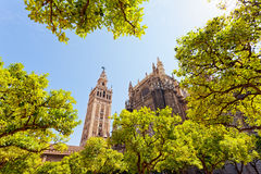 Cathedral and GIralda Tower, Seville. Spain Royalty Free Stock Image