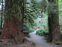 Cathedral Grove Stock Images