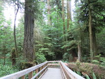 Cathedral Grove Stock Image
