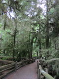 Cathedral Grove Stock Photo