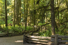 Cathedral Grove Trails Stock Images