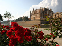 Cathedral La Seu in Palma de Mallorca. Spain behind red roses. This church is one of the famous landmarks of Mallorca (Majorca). In the foreground Park del Mar royalty free stock image