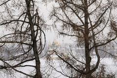 Cathedral through larch trees. View on a cathedral through the bare branches of the larch trees growing on the other side of Volga river, Uglich, Yaroslavl Royalty Free Stock Images