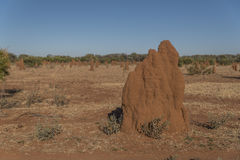 Cathedral mound termites Royalty Free Stock Photos