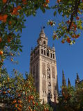 Cathedral orange trees Royalty Free Stock Image