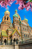 Cathedral of Our Savior on Spilled Blood in St Petersburg, Russia in sunny autumn day Stock Images