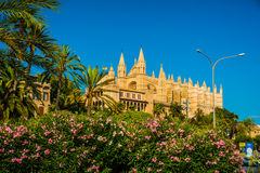Cathedral of Palma de Mallorca. Beautiful flowers on the bushes in Palma de Mallorca. Cathedral building viewed through lush greenery of the island. Big gothic Stock Images