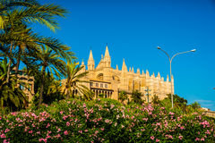 Cathedral of Palma de Mallorca. Beautiful flowers on the bushes in Palma de Mallorca. Cathedral building viewed through lush greenery of the island. Big gothic Stock Photography