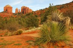 Cathedral rock landscape Royalty Free Stock Photo