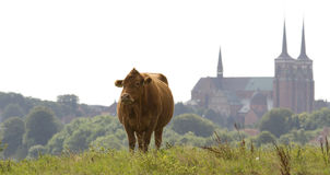 The Cathedral of Roskilde. Roskilde Cathedral and cow in front Stock Photo