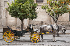 Cathedral, Seville - Sevilla with Horse and Carriage, Spain Stock Photo