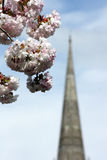 Cathedral Spire & Blossom Royalty Free Stock Photos