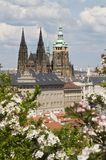 Cathedral of st. vitus in prague Royalty Free Stock Photos
