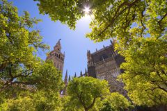 Cathedral tower in Seville. Spain Stock Photos