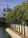 cathedrale法国贵妇人ile路易斯notre巴黎st 库存图片