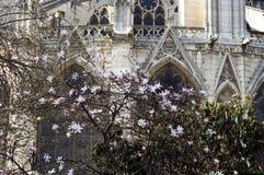 cathedrale de法国贵妇人notre巴黎 免版税库存照片