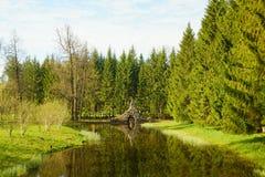 catherine parkowy selo tsarskoye Zdjęcie Stock