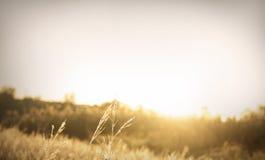 Cathing la salida del sol Foto de archivo libre de regalías