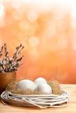 Catkin e ovos no ninho foto de stock royalty free