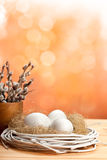 Catkin and eggs in the nest Royalty Free Stock Photo