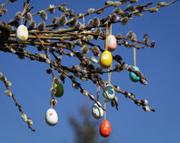 Catkin and eggs Stock Images