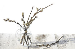 Catkin in a vase Stock Images