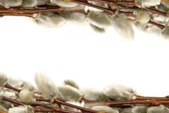 catkins Στοκ εικόνα με δικαίωμα ελεύθερης χρήσης