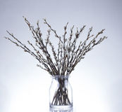 catkins images stock