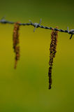 Catkins Stock Image