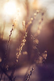 Catkins in morning sun Stock Photography