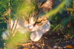 Catlike muzzle Stock Images