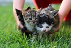 Catling Foto de archivo