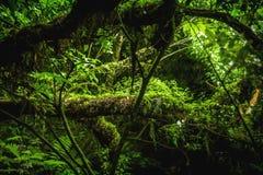 Catlins parkowy gęsty las, Nowa Zelandia fotografia royalty free